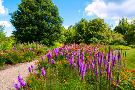 arboretum: A patch of beautiful wildflowers dominated by Blazing Star and purple coneflowers