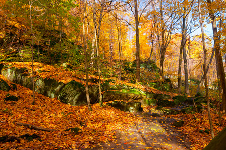 blanketed: Rock ledges and path blanketed by the leaves of autumn