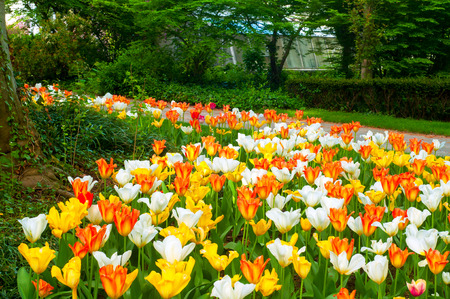 ohio: A carpet of bright yellow, white, and pink-orange tulip wraps around a tree in a botanical garden