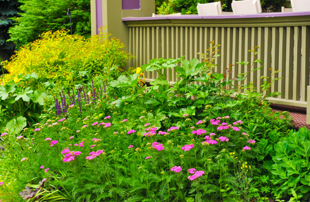 yarrow: A lush bed of yarrow, sage, and other flowers bordering a veranda