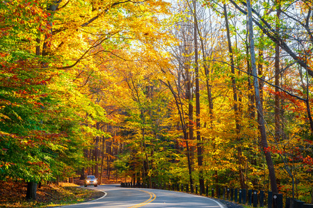 A small truck approaches on curvy road climbing through a sunlit autumn woods. photo