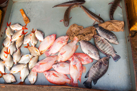 scaler: A tray of fish of various kinds lies on the ground in an open-air market in Phnom Penh, Cambodia