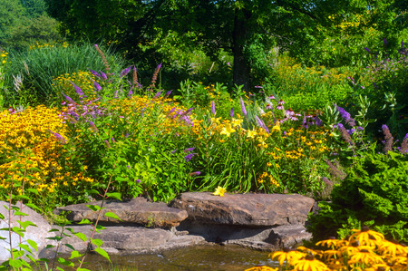 Butterfly garden with cutleaf coneflowers and butterfly bush and water decor Stock Photo