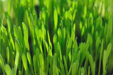 Close-up photography of green grass with shallow depth of field and focus in the middle photo