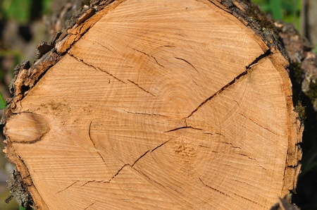 View from top at the cross section of tree showing rings and cracks Stock Photo - 11212267