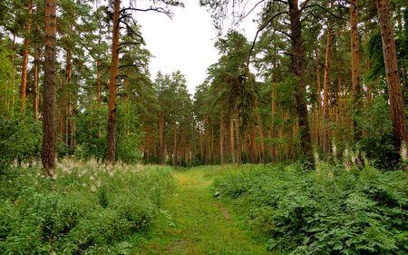 forest road landscape photo