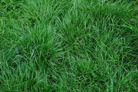 green grass background photo