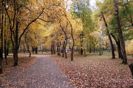clearing the path: autumn,  leaf fall in a Park