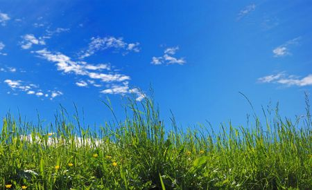 green grass on blue sky background Stock Photo - 1093345