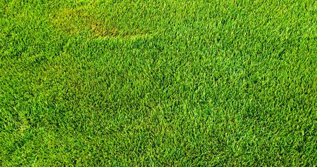 vibrant green grass  lawn texture photo