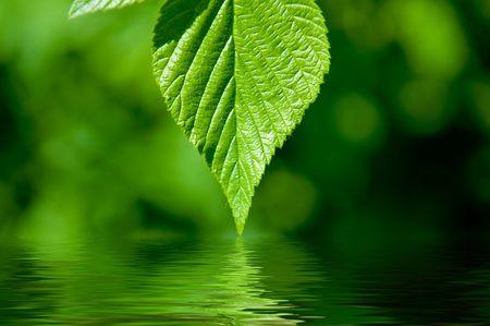 緑色の葉を水に反映して