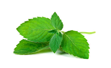 mint leaves: Mint leaf isolated  over white background