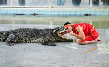 PATTAYA, THAILAND - 8 SEPTEMBER:  Show of crocodiles performer rests on the crocodile during a show in a zooon Septemberr 8, 2013 in Pattaya, Thailand