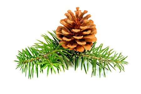 pinetree: Fir branches with cones isolated on white background Stock Photo