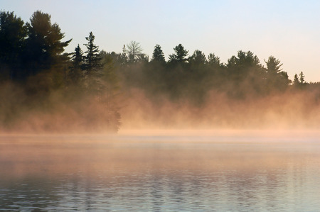 marsh plant: Sunrise and mist in beautiful lake in Algonquin Park