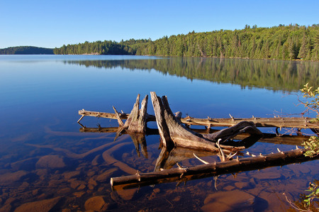 snag: Snags in blue lake water in sunrise light Stock Photo