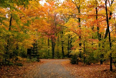 ontario: Path in maple forest near George Lake. Killarney Park. October.