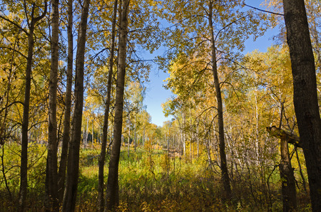boles: Forest in sunny fall day