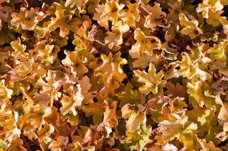 dode bladeren: Dode bladeren geschoten ideaal voor achtergronden en texturen