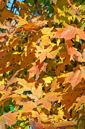 ontario: Falls colorful trees in park. Ontario, Canada