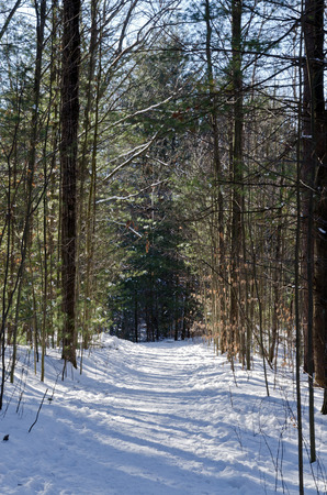 winter time: Canadian forest in winter time