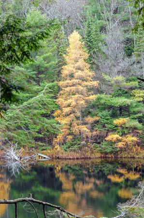 provincial forest parks: Lake in Algonquin Park during the fall season
