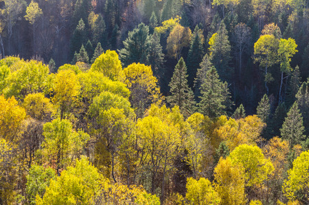 algonquin park: Fall colorful trees in Algonquin park . Ontario, Canada Stock Photo