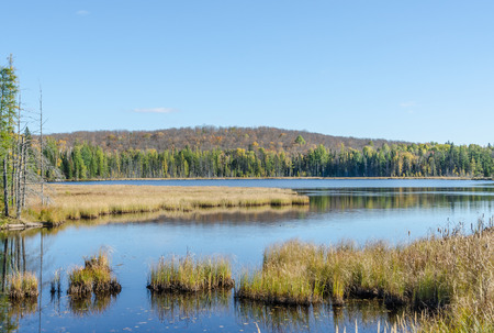algonquin park: Lake in Algonquin Park during the fall season