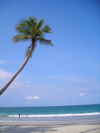 albero di cocco sulla spiaggia a Bintan, Indonesia. Una bella fuga dalla vita occupato.