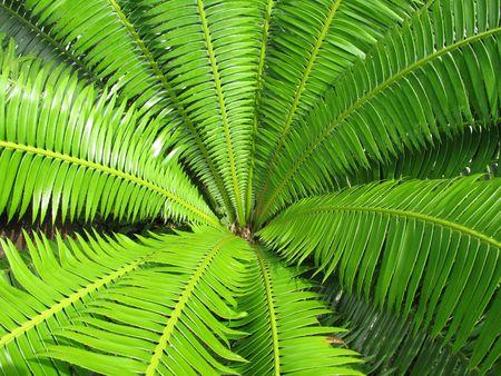 apra la priorit� bassa verde del foglio del fern, buona per priorit� bassa, la struttura, carta da parati dei disegni