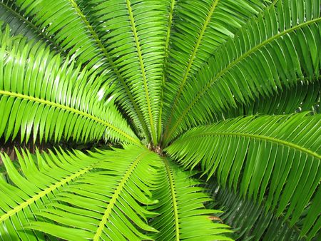 open green fern leaf background, good for background, texture, wallpaper of designs