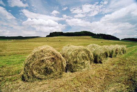 Agriculture field Stock Photo - 336022