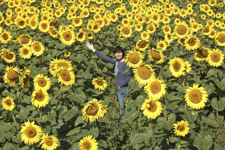 blissful: Field of sunflowers with happy woman. Blissful field of sunflowers. Horizontal view.