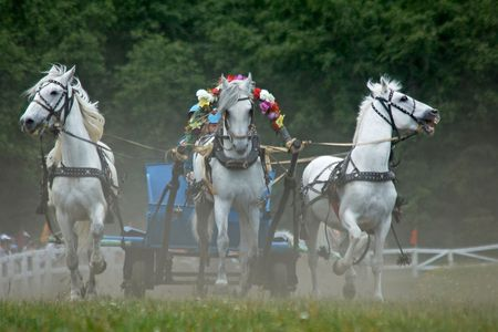 horse chestnut: Horse race. Three horses  in harness.Rounding the Turn. Stock Photo