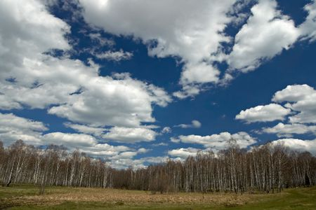 Spring landscape with birch forest, field, blue sky and  clouds. Stock Photo - 766153