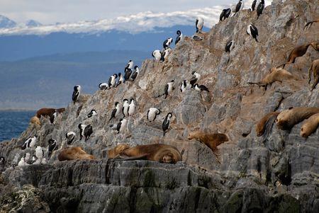 fuego: Relaxing sealions and sea birds. Island in the Beagle Channel, Tierra Del Fuego, Argentina.