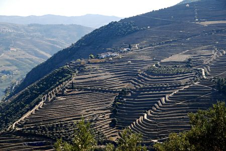portugal agriculture: Douro Valley - mail Vineyard region in Portugal. Portugals port wine vineyards.Point of interest in Portugal.