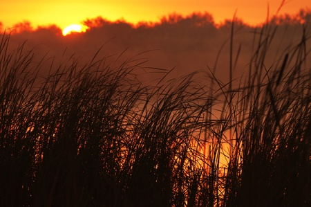 reed: Sunrise on the lake and reed