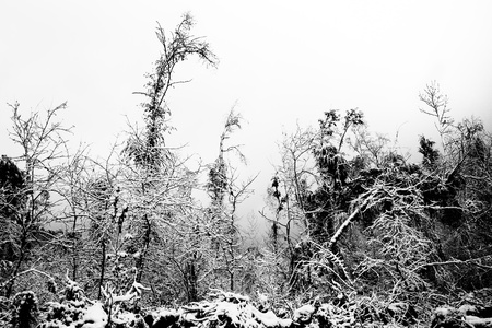 dreary: Gloomy winter forest in the fog Stock Photo