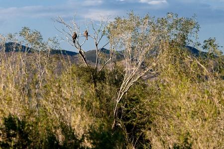 predatory: Predatory birds waiting for prey in forest Stock Photo