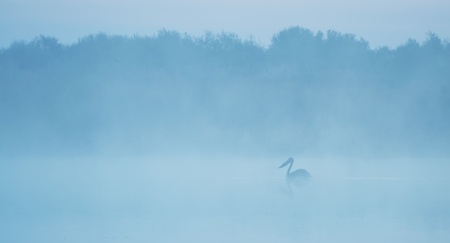 Pelican silhouette on a lake in the morning mist photo