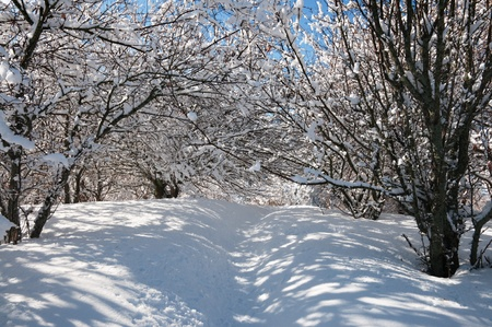 Winter garden with the apple trees