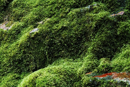 Fresh wet green natural moss background photo