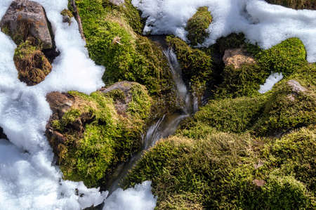 cascade mountains: Green moss and snow on the mountain stream
