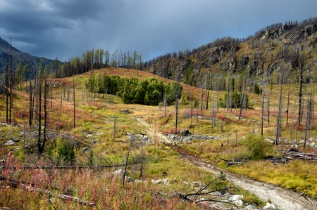 Forest recovering after a fire in the mountains of Altai, Kazakhstan photo