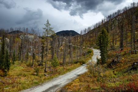 recovering: Forest recovering after a fire in the mountains of Altai, Kazakhstan