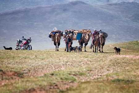 NORTH MONGOLIA, MONGOLIA - AUG 14, 2012: Caravan of camels transporting dismantled tent of Mongolian nomads to a new location