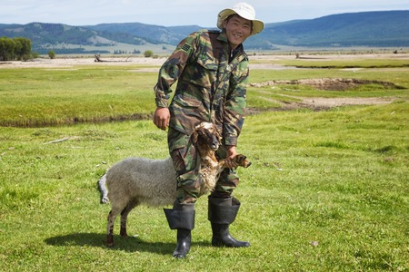NORTH MONGOLIA, MONGOLIA - AUG 21, 2012: Mongolian herder catches a young lamb for sale to foreign tourists
