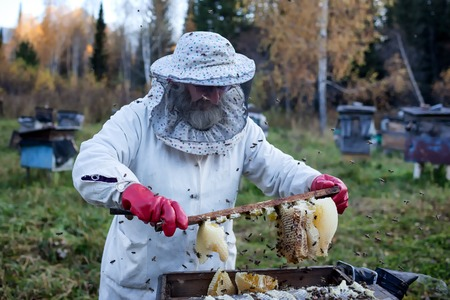 protective workwear: RIDDER, KAZAKHSTAN - OCT 01, 2009: Old beekeeper gathers honey on a sunset in the apiary in a forest Editorial