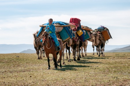 NORTH MONGOLIA, MONGOLIA - AUG 14, 2012:  Mongolian woman operates caravan of camels transporting dismantled tent of Mongolian nomads to a new location